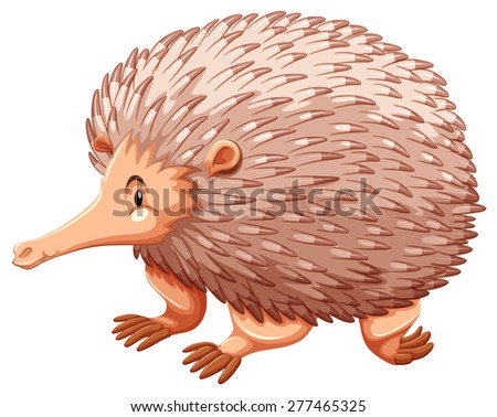Side view of an echidna on white background