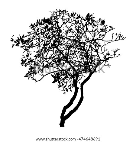 silhouette black tree, natural plant sign, isolated vector illustration on white