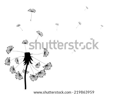 Silhouette dandelion with seeds on white background. Vector EPS10. - stock vector