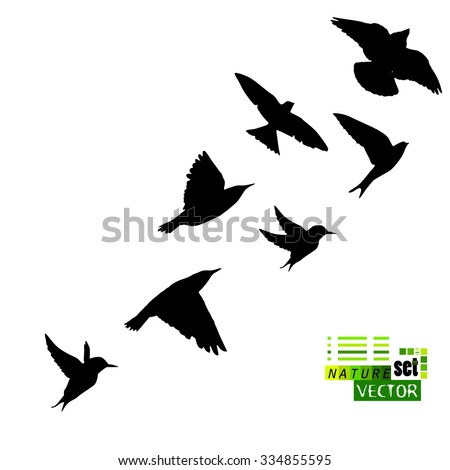 Silhouette flying birds. Vector