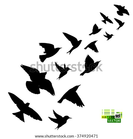 Birds Flying Silhouette Stock Photos, Images, & Pictures ...