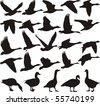 Silhouette geese, black and white vector illustration - stock vector