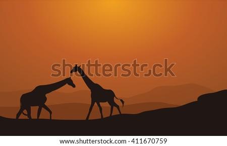 Silhouette Giraffe On Sunset Background in the fields - stock vector