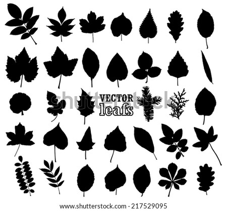 silhouette leaf set/ vector illustration - stock vector