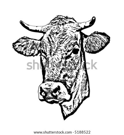 Silhouette of a cow's head. - stock vector
