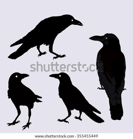 silhouette of a crows in different positions. vector illustration. black ravens on grey. Isolated. rook illustration. - stock vector