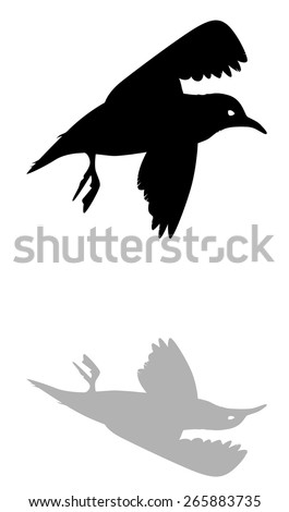silhouette of a flying Seagull against a white background vector