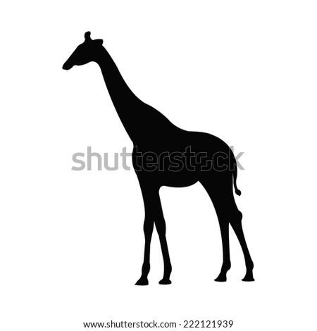 Giraffe Silhouette Silhouette of a Giraffe
