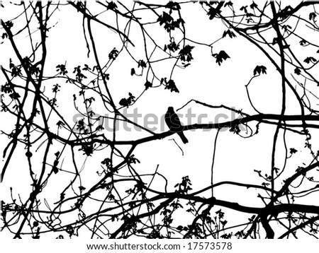 Silhouette of bird on branch - stock vector
