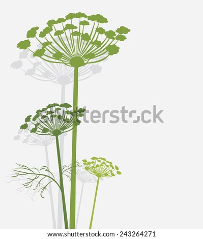 Silhouette of blooming fennel. Vector - stock vector