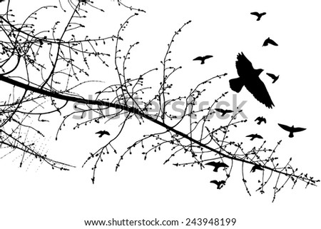 Silhouette of branches of a tree with birds - stock vector