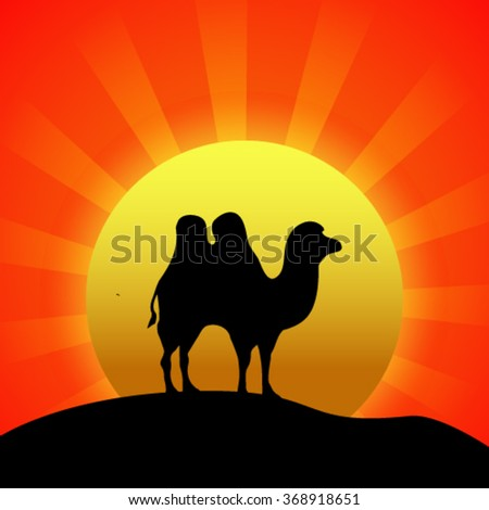 Silhouette of camel at sunset. - stock vector