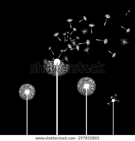 Silhouette of dandelion flowers. Isolated on a black background. Vector Image Stock. - stock vector