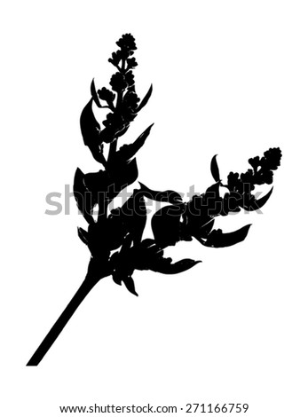 Silhouette of flower buds of lilac isolated on white