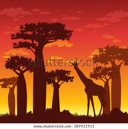 Silhouette of giraffe and baobabs on a red sunset sky. African vector landscape.  - stock vector