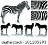 Silhouette of  giraffes  and detailed skin and shadows-vector - stock vector