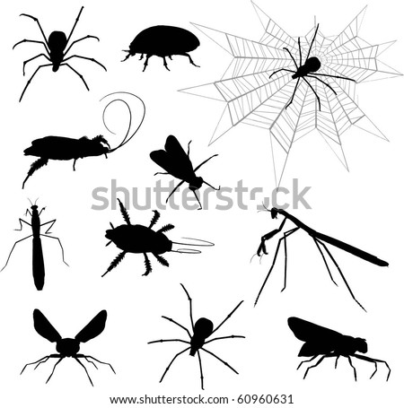 Silhouette of insects - stock vector