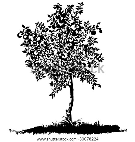 silhouette of isolated apple tree - stock vector