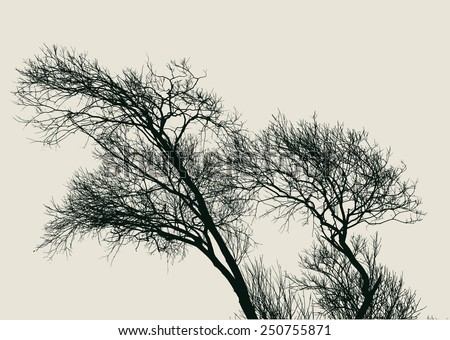 silhouette of old willow trees. detailed vector illustration - stock vector
