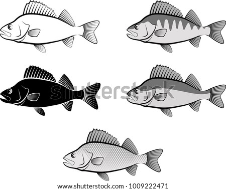 silhouette of perch fish and line art