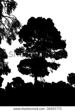 Silhouette of pine tree on white background vector illustration