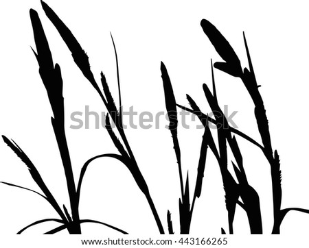 Silhouette of Sedge