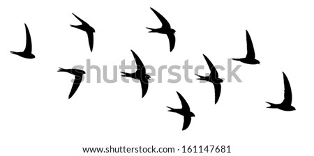 Silhouette of the birds in flight. Screaming party of the swifts. - stock vector