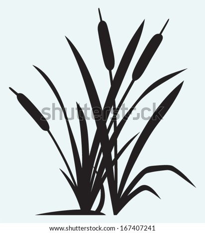 Silhouette reed isolated on white background - stock vector