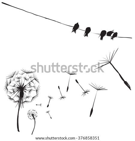 silhouettes of birds and flowers dandelion, birds on wires, vector isolated