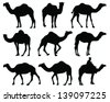 silhouettes of camel vector
