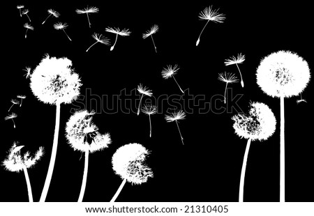 silhouettes of dandelions in the wind on black background - stock vector