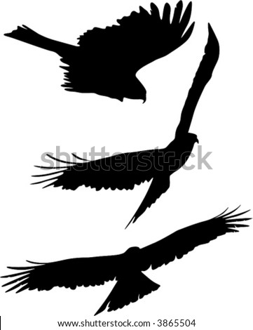 Silhouettes of eagle flight