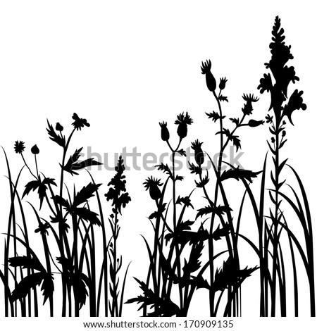 Silhouettes  of flowers and grass, vector illustration
