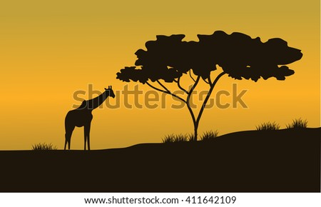 silhouettes of Giraffes and trees on Safari at the sunset - stock vector