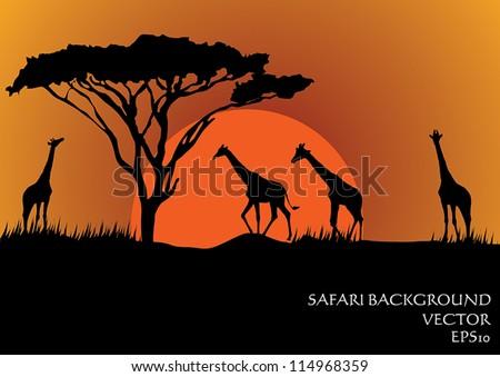 Silhouettes of giraffes in safari sunset background vector illustration - stock vector