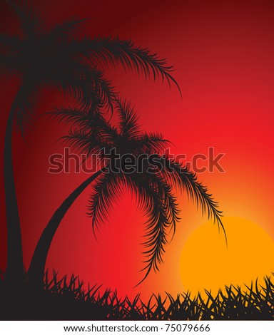 Silhouettes of palm trees against a decline. Vector - stock vector