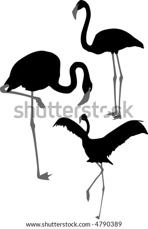 Silhouettes of pink flamingo