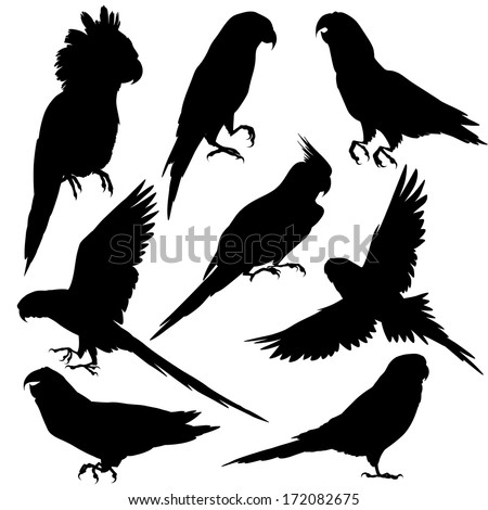 Parrot Stock Photos Royalty Free Images amp Vectors