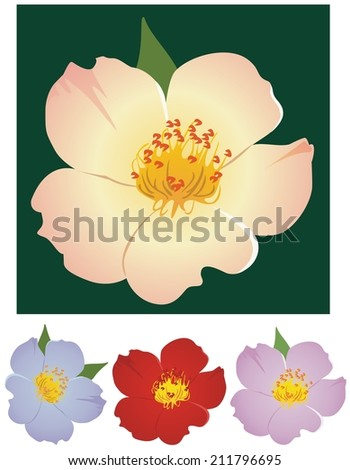 Simple rose illustration with variations - stock vector