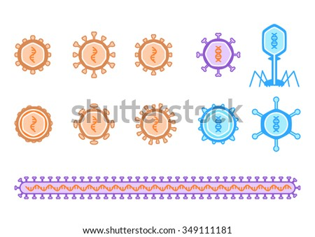Simple viruses diagram describing RNA and DNA virus, including bacteriophage. RNA is orange orange while DNA viruses have blue. The long virus purposed for ebolavirus and its families. - stock vector