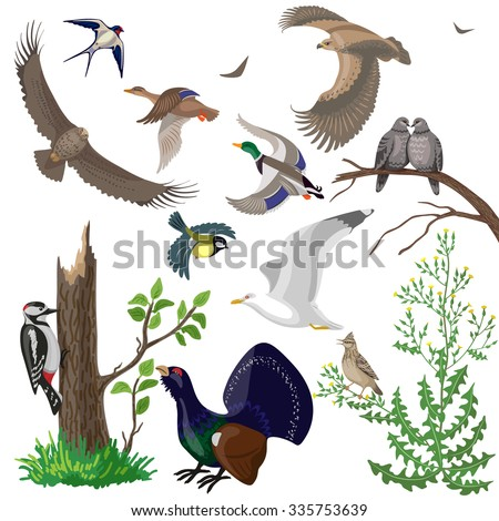 Simplified images of birds of prey, waterfowl and migratory songbirds. Set of different wild animals isolated on white.  - stock vector