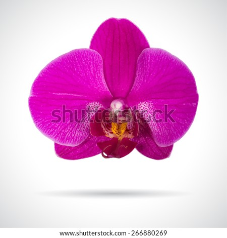 Single orchid flower. Realistic vector illustration.