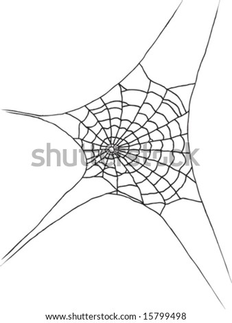 Single spider web - vector - stock vector