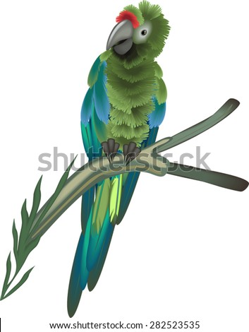 Sitting green macaw parrot - stock vector
