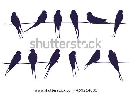 swallow silhouette stock images royaltyfree images