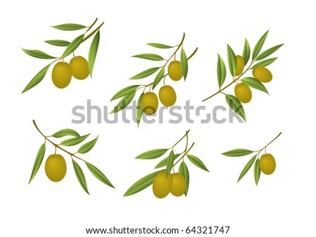 Six green olive branches - stock vector