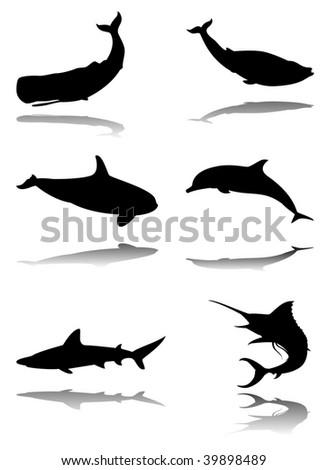 Six silhouettes with reflex of marine animals: sperm whale, blue whale, orca, dolphin, shark, marlin - stock vector