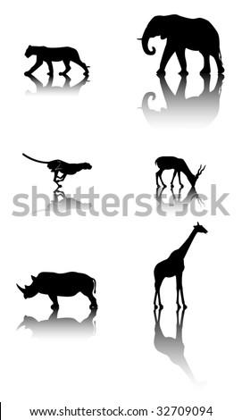 Six silhouettes with reflex of wildlife animals: lion, elephant, cheetah, antelope, rhinoceros, giraffe - stock vector
