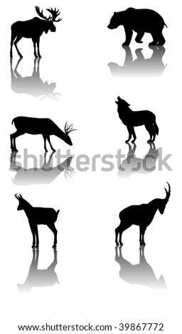 Six silhouettes with reflex of wildlife animals: moose, bear, deer, wolf, chamois, ibex - stock vector