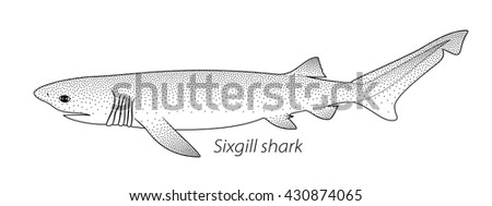 Sixgill shark stippled vector illustration